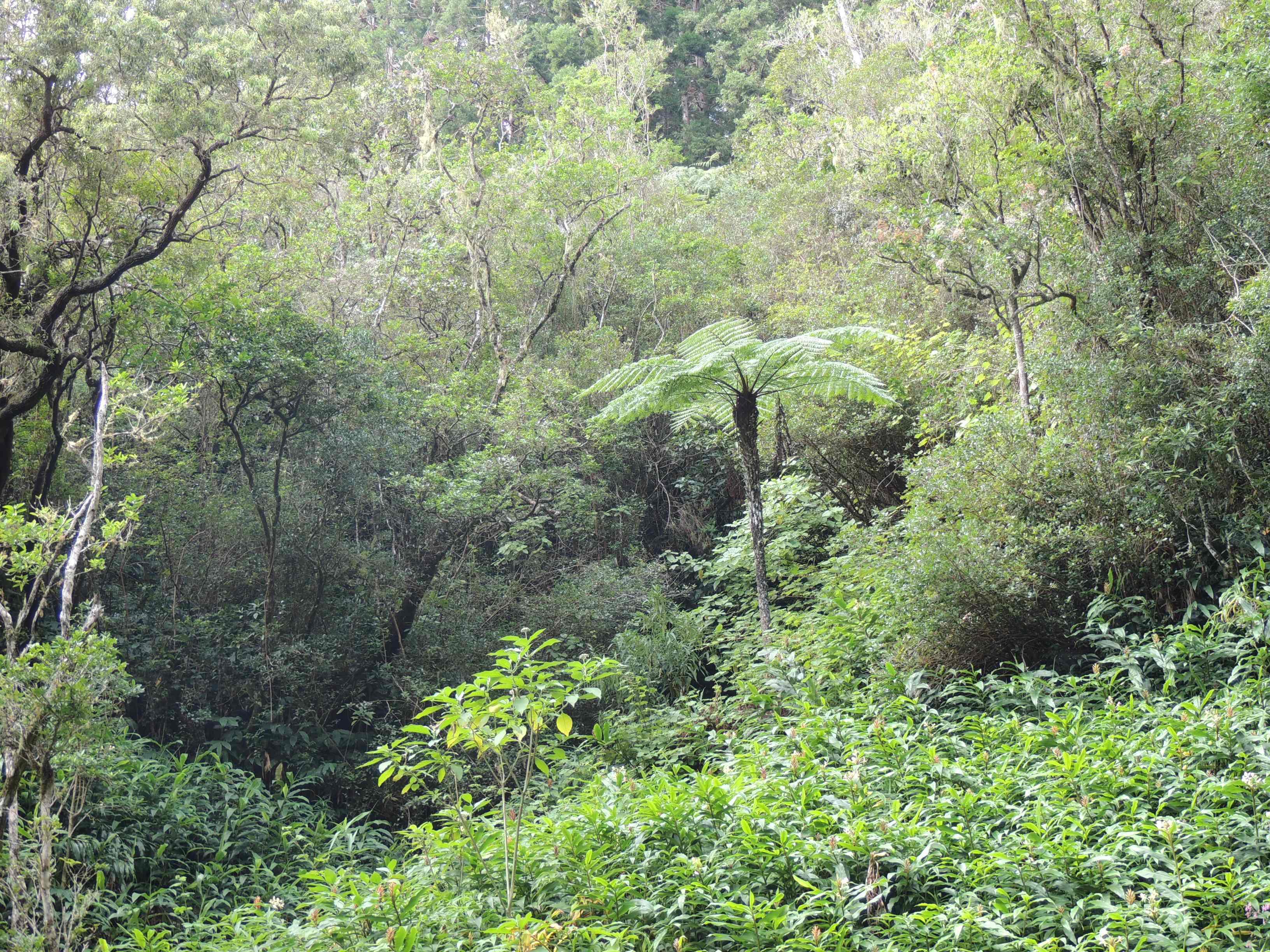 forêt-bois-de-couleur-tamarins-reunion