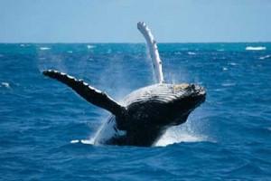 baleine-réunion