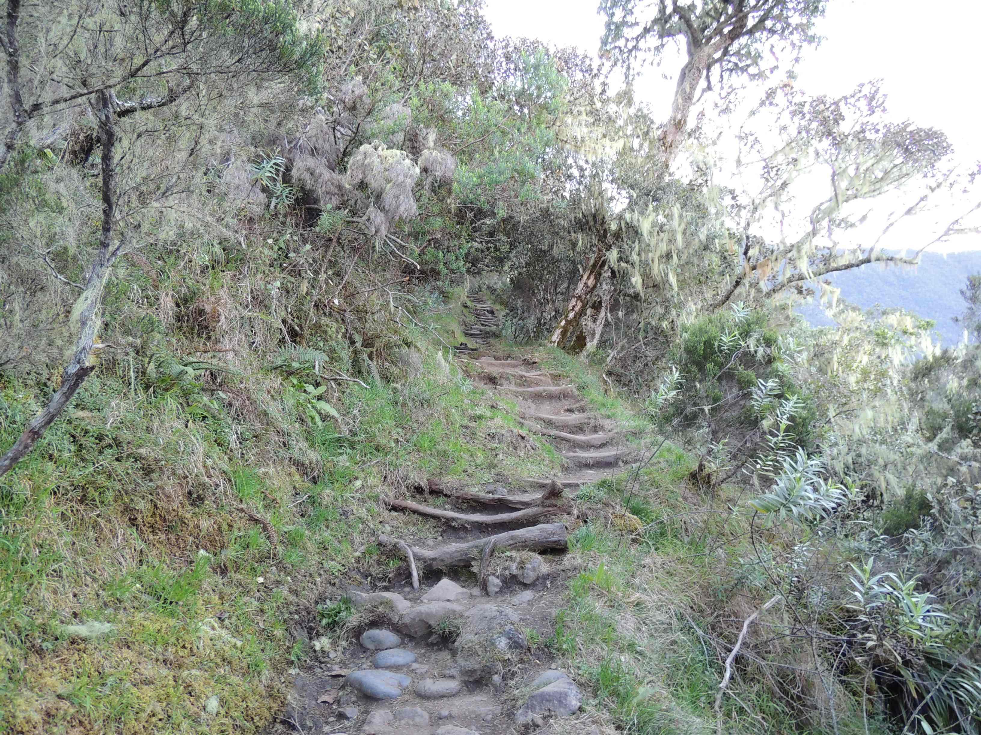 Sentier Cilaos Piton des Neiges