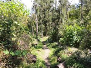 Le Piton d'Anchaing depuis Ilet à Vidot
