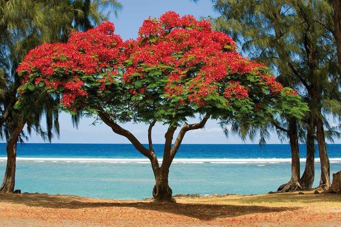 Plage Flamboyant Réunion