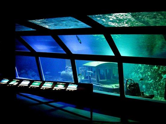 musee-aquarium-de-la-reunion