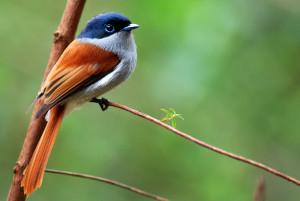 oiseau-la-vierge