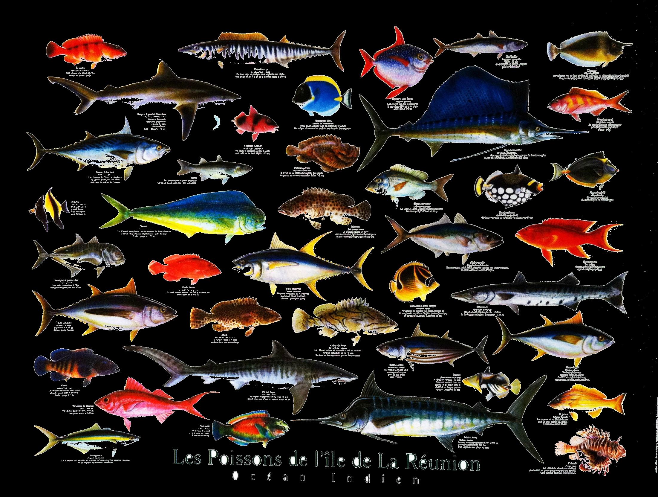 poissons-de-la-reunion