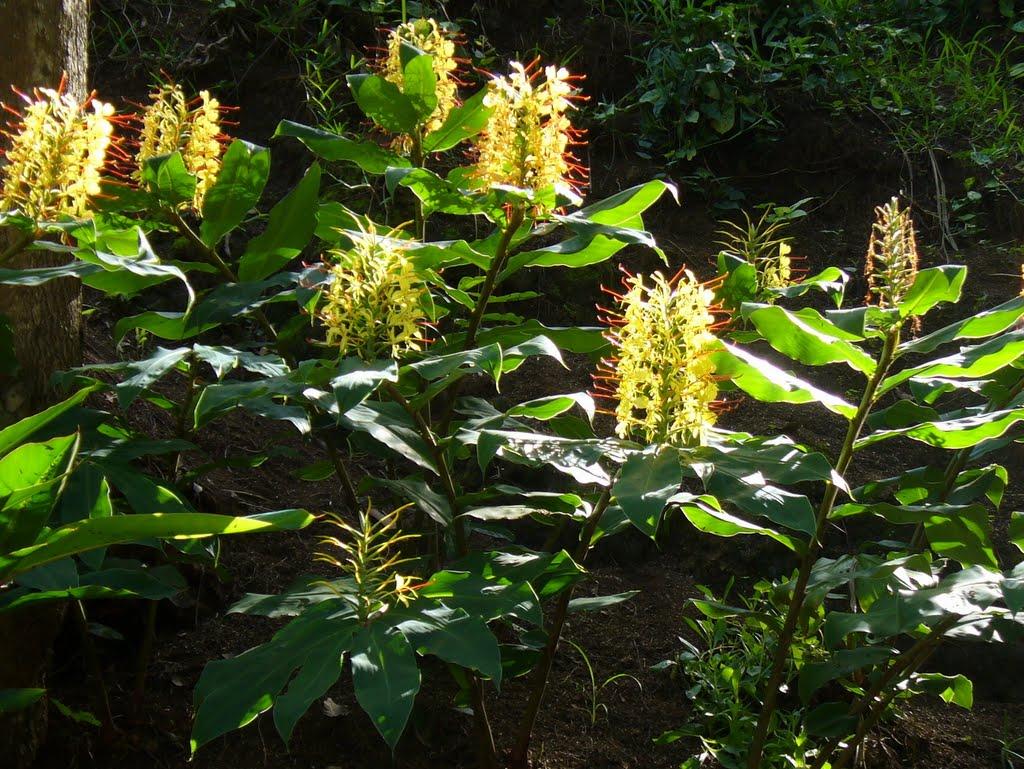 longose-fleurs-jaunes