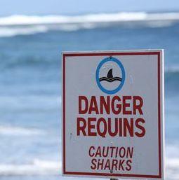 risque-requin-reunion
