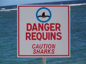 Le risque requin à La Réunion
