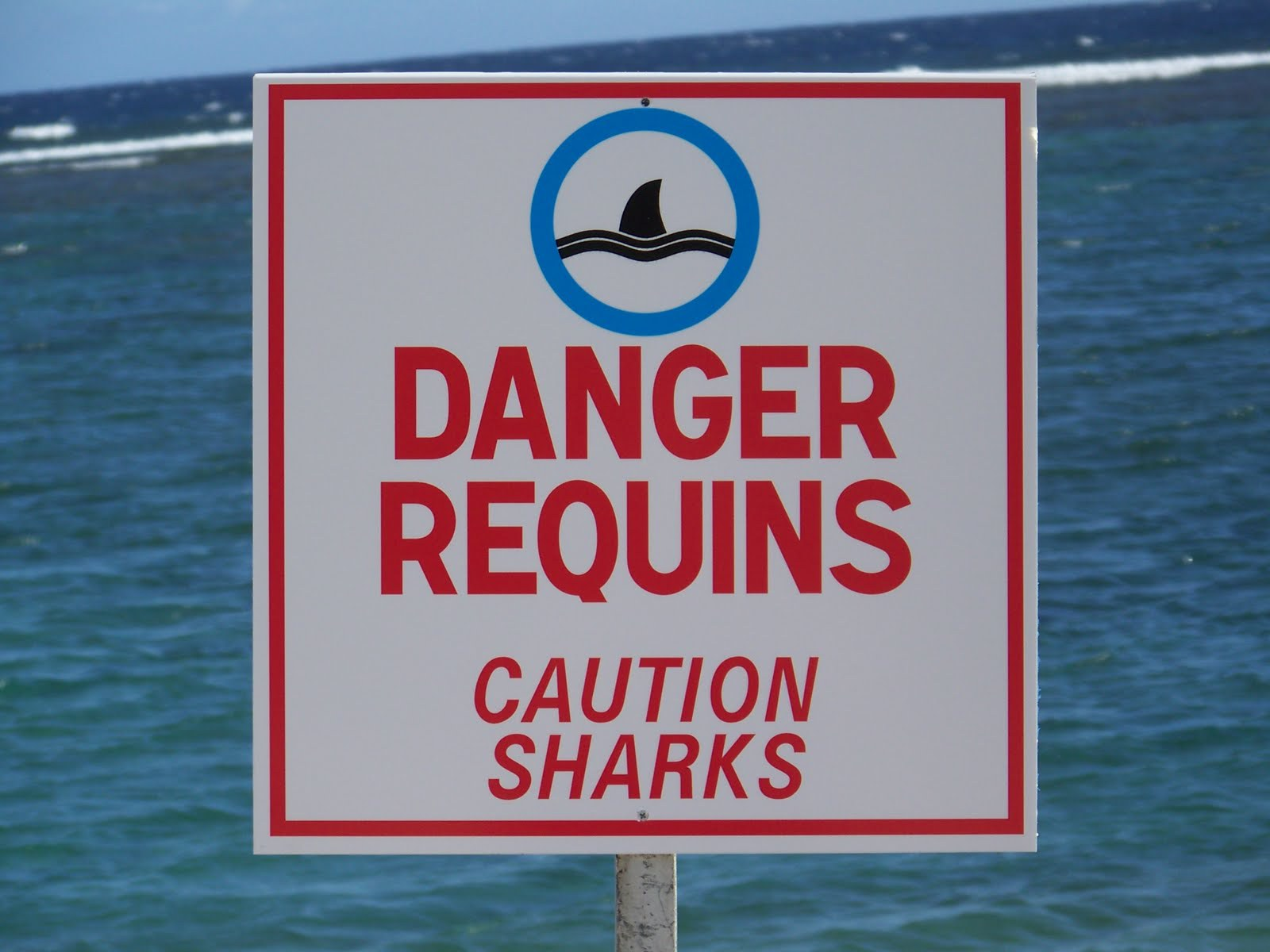 Le risque requins à la Réunion