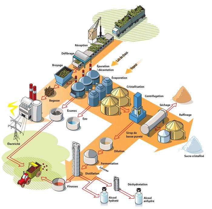 schéma-filiere-canne-bagasse-sucre-rhum-electricite