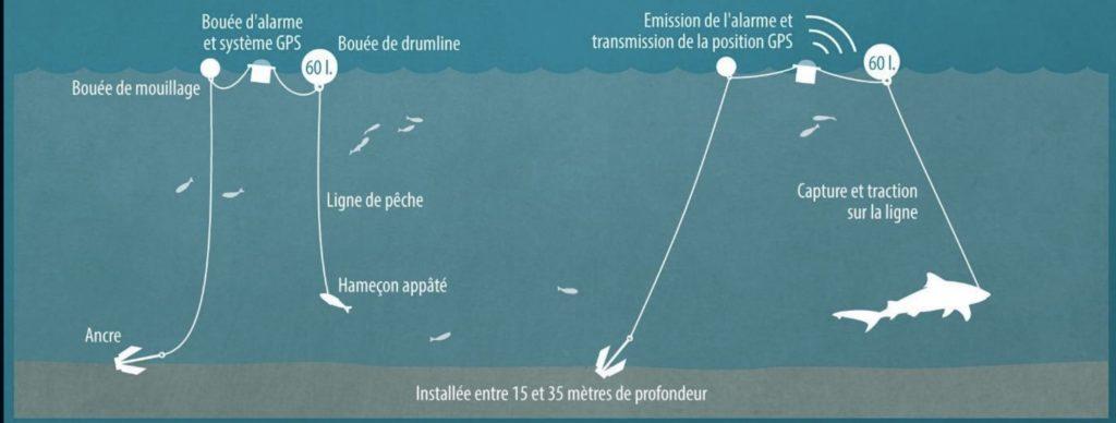 pêche reduction risque requin 974
