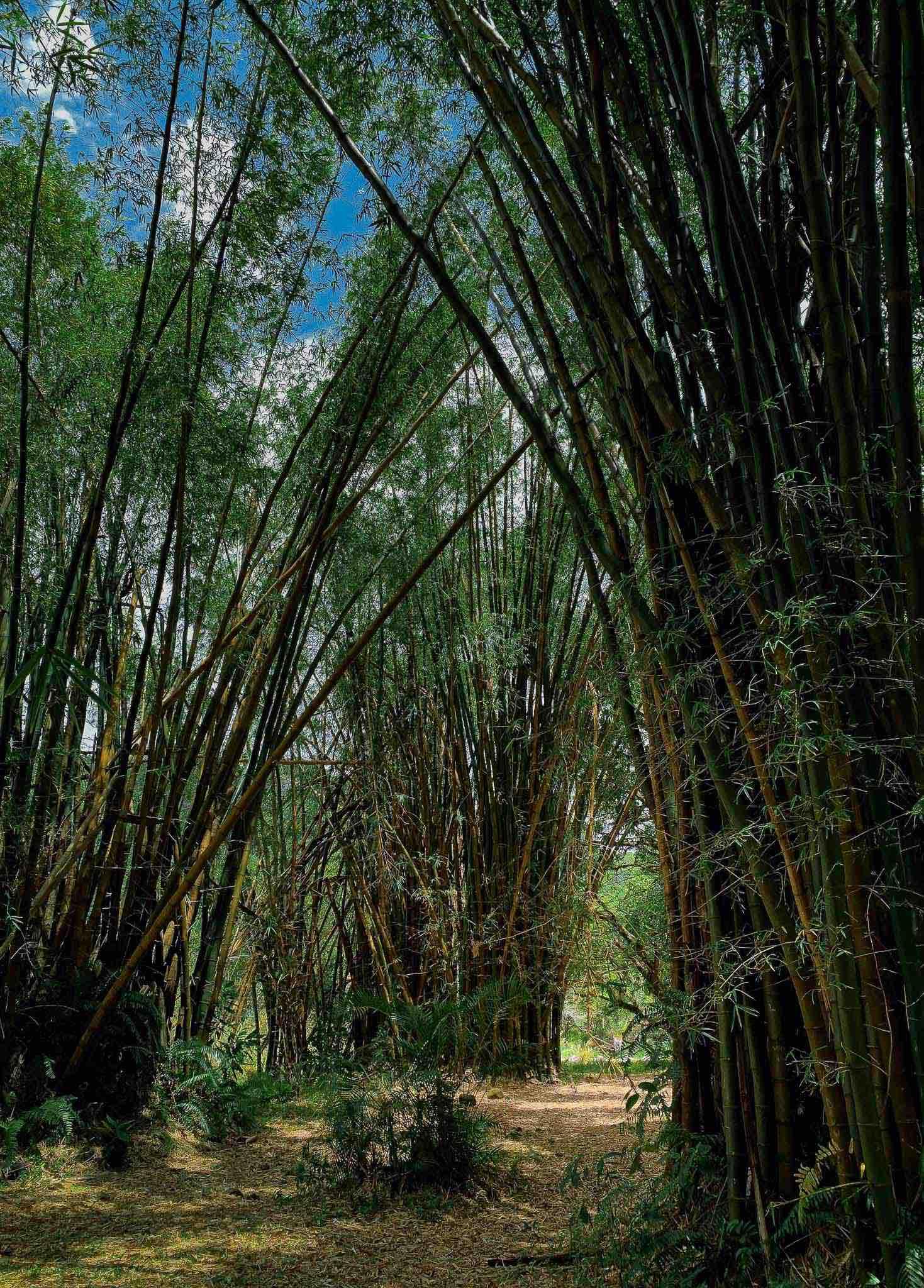 Visites à La Réunion avec les Aventuriers de l'Est