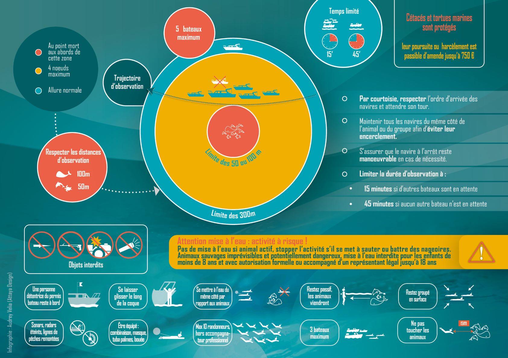 carte approche baleine 2020 La Réunion