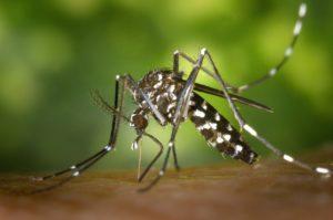 dengue à la réunion : épidémie en 2020 ouest 974