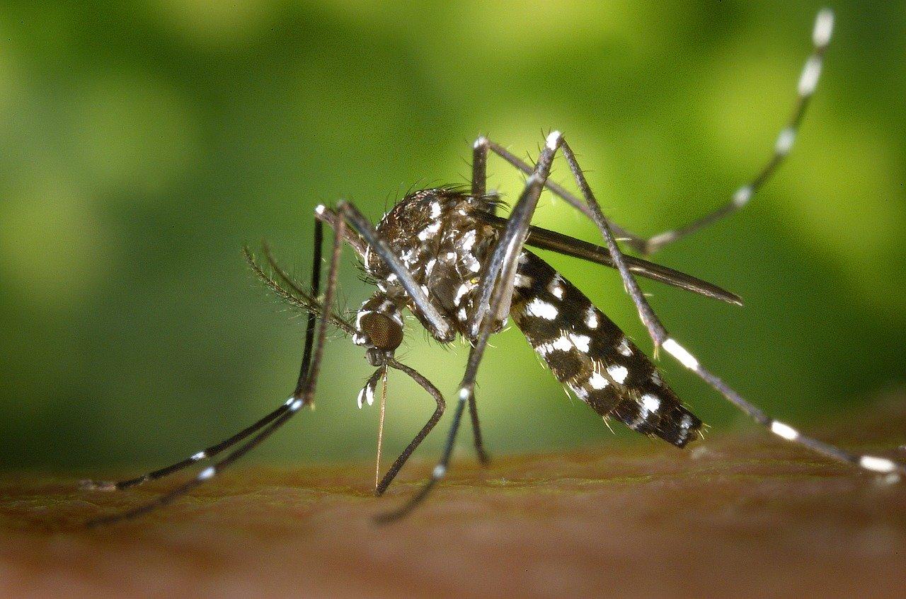 Dengue à La Réunion en 2020 : l'épidémie concerne désormais toute l'île